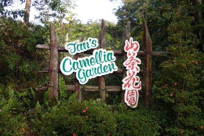 Camellia Garden 1 - mcHiker