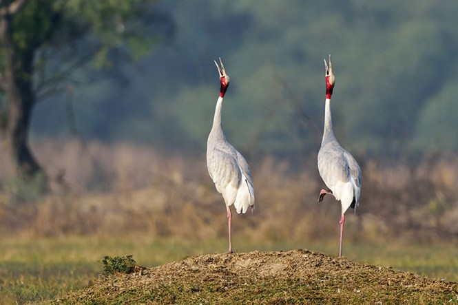 agra honeymoon Bharatpur Bird Sanctuary