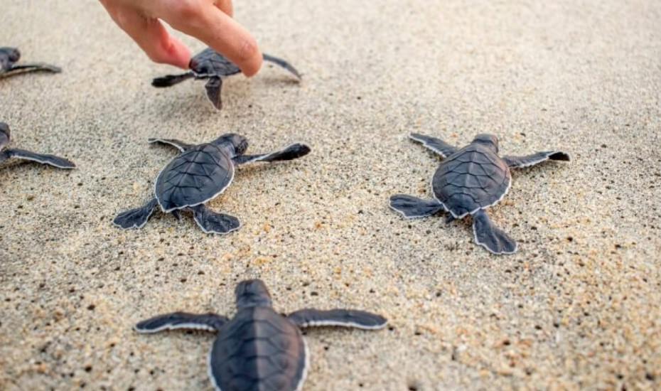 turtle conservation sanur bali