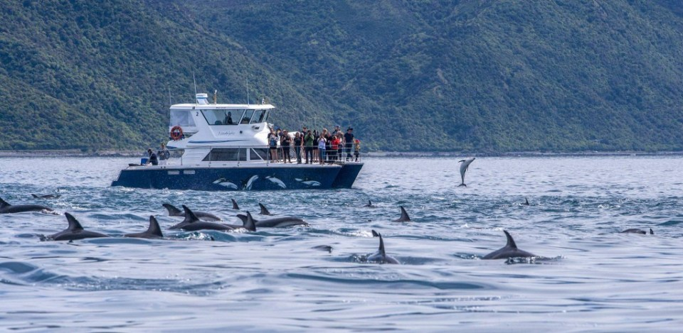 new zealand south island honeymoon dolphin watching