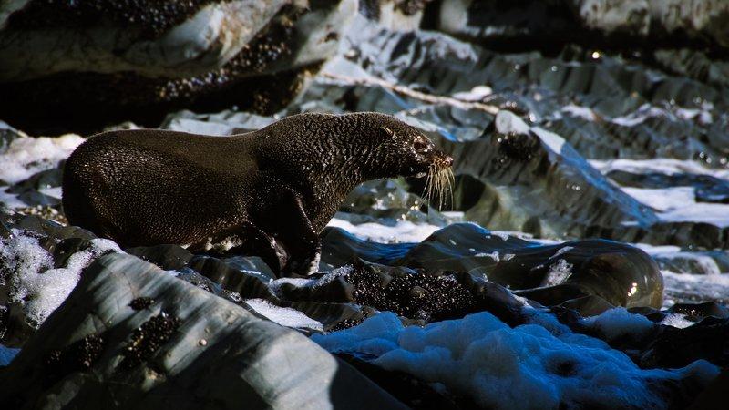 Seal Colony Tauranga Bay