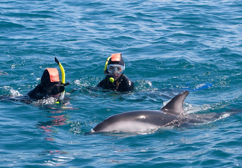 Swim with Dolphins Kaikoura New Zealand South Island Itinerary