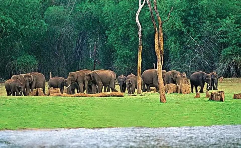 Munnar Chinnar Wildlife Sanctuary Night Safari