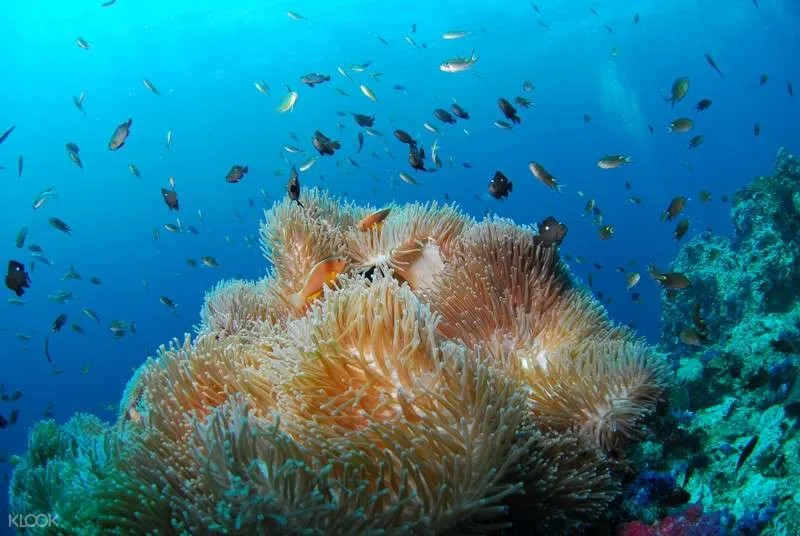 Scuba Diving Experience in Havelock Island