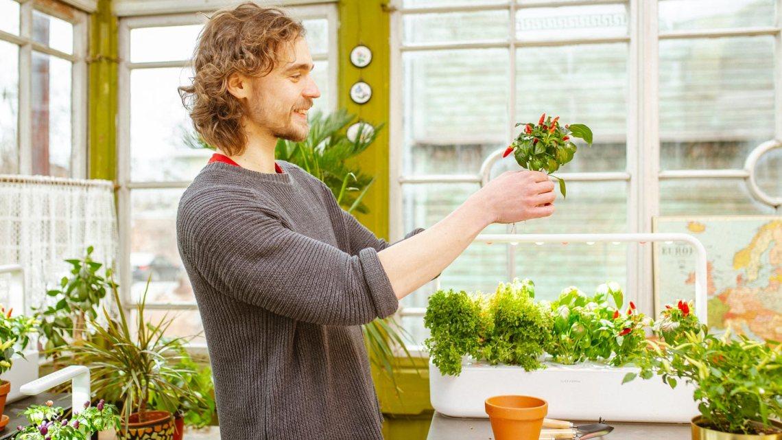 Best Indoor Garden Kits & Hydroponics in Singapore