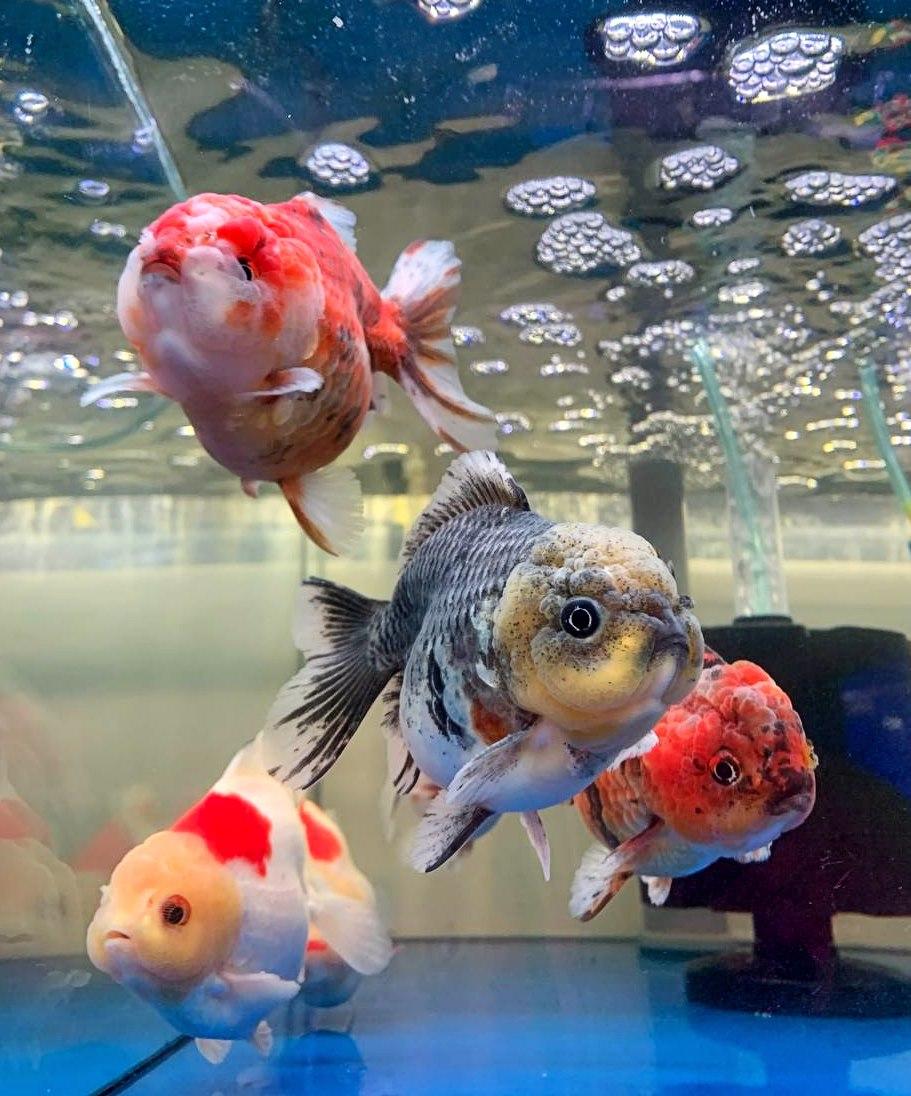 That Aquarium