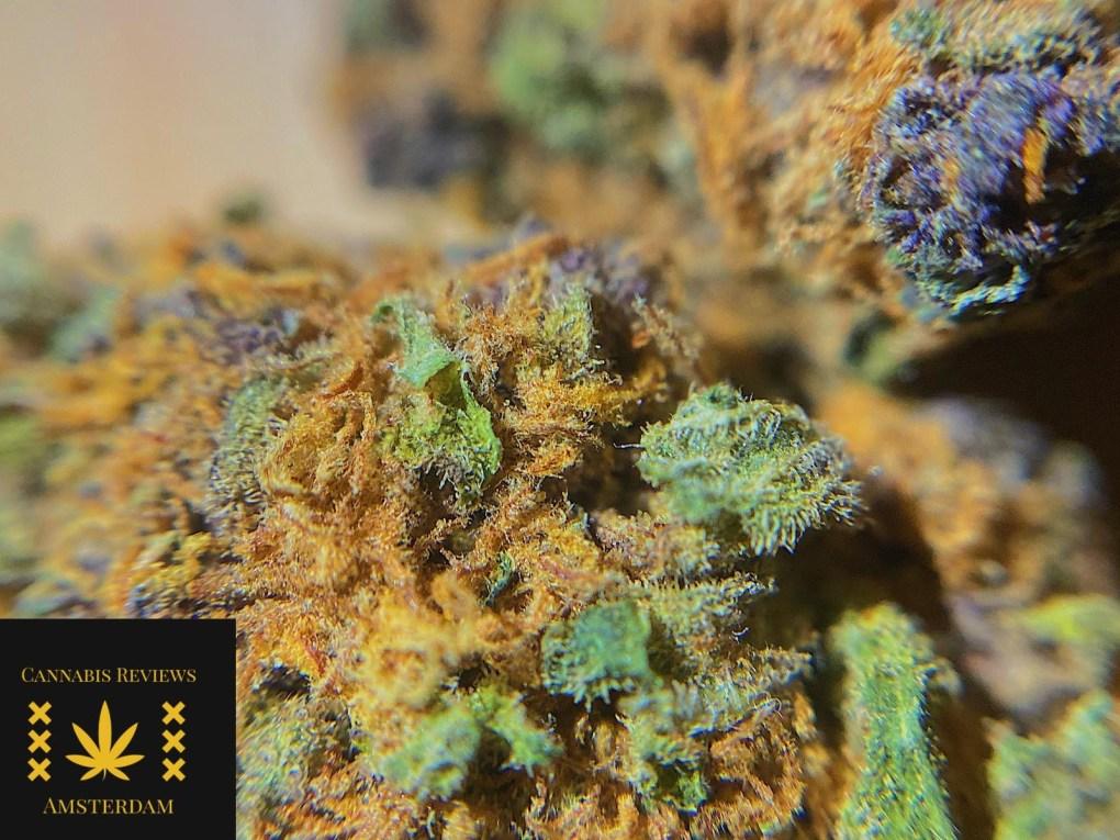 465cabbd 2c74 4717 9e3e cc8ad5a78a6d The Weed Blog - Cannabis News, Culture, Reviews & More