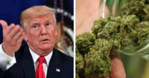 Trump on Weed: 'I Probably Will End Up Supporting' End to Federal Ban