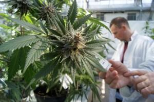 Cronos' $122 million deal will genetically engineer cannabis