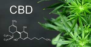 Why CBD is more than a medicine