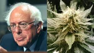 Bernie Sanders Blasts Marijuana Prohibition In New Book