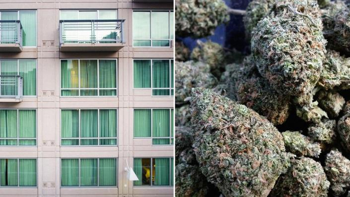 Trump Official Wants To 'Legally Permit' Medical Marijuana In Federally-Subsidized Housing