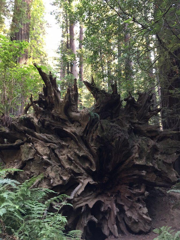 Things to do in Humboldt County