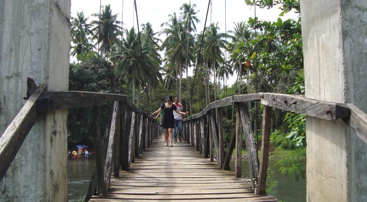 Jimenez camel tree - Jimenez hanging bridge