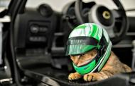 Lotus takes the lead with new cat helmets (April Fools)