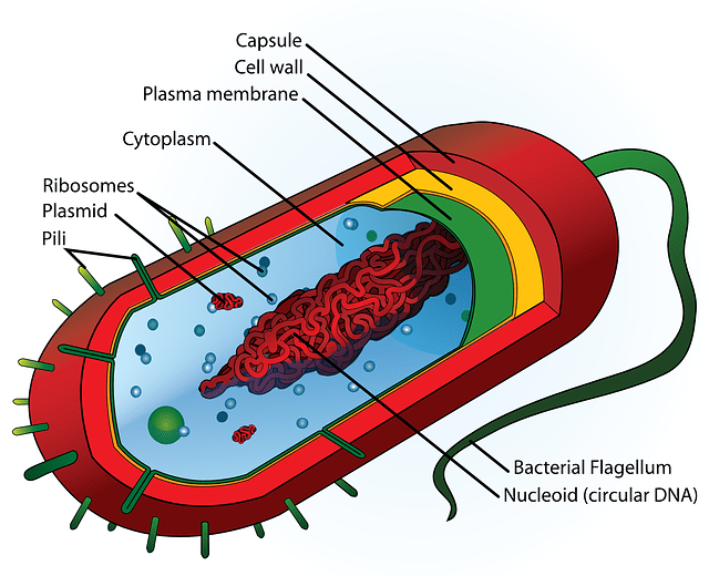 What is Prokaryotic Cell?