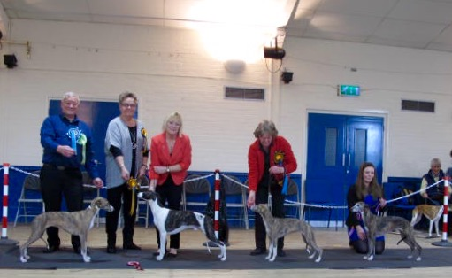 2016 Whippet Club Limited show BIS RBIS BP BV