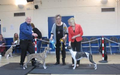 The Whippet Club Limited Show Results – Saturday 16th January 2016