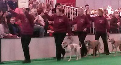Obreedience Team Qualifies for Crufts 2016