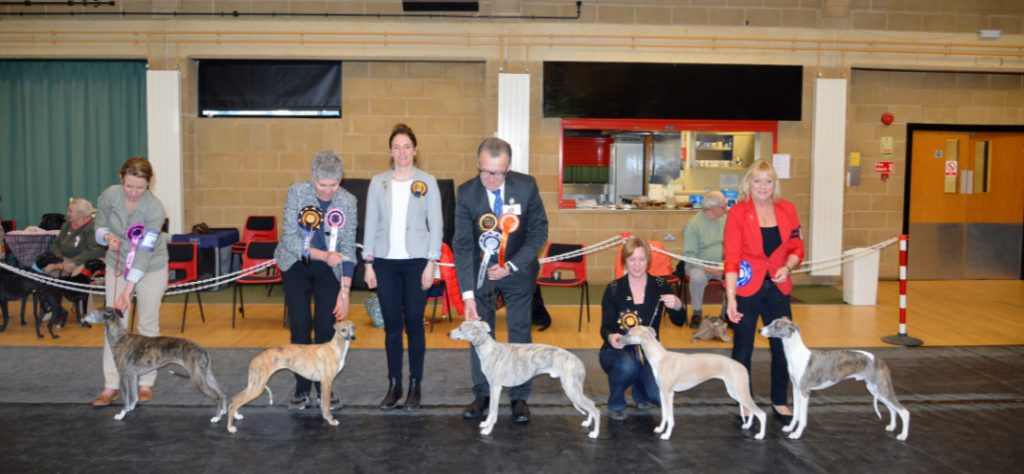 Critique - Whippet Club Limited Members Show Jan 2017