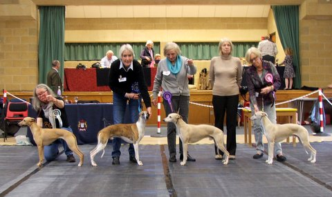Whippet Club Limit Show - Jan 18 BiS, RBiS, BV, BP