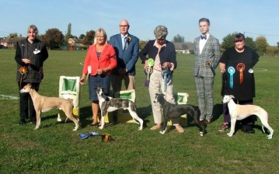 Whippet Club Open Show 29 September 2018 – Results