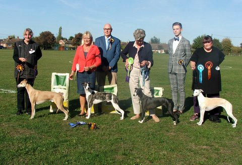 Whippet Club Open Show
