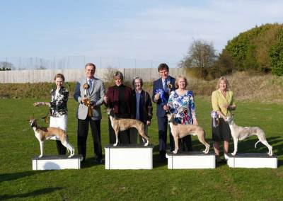 Whippet Club Championship Show April 2016 – Gallery