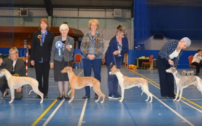 The Whippet Club Championship Show 6th April 2019 – Bitch Critique