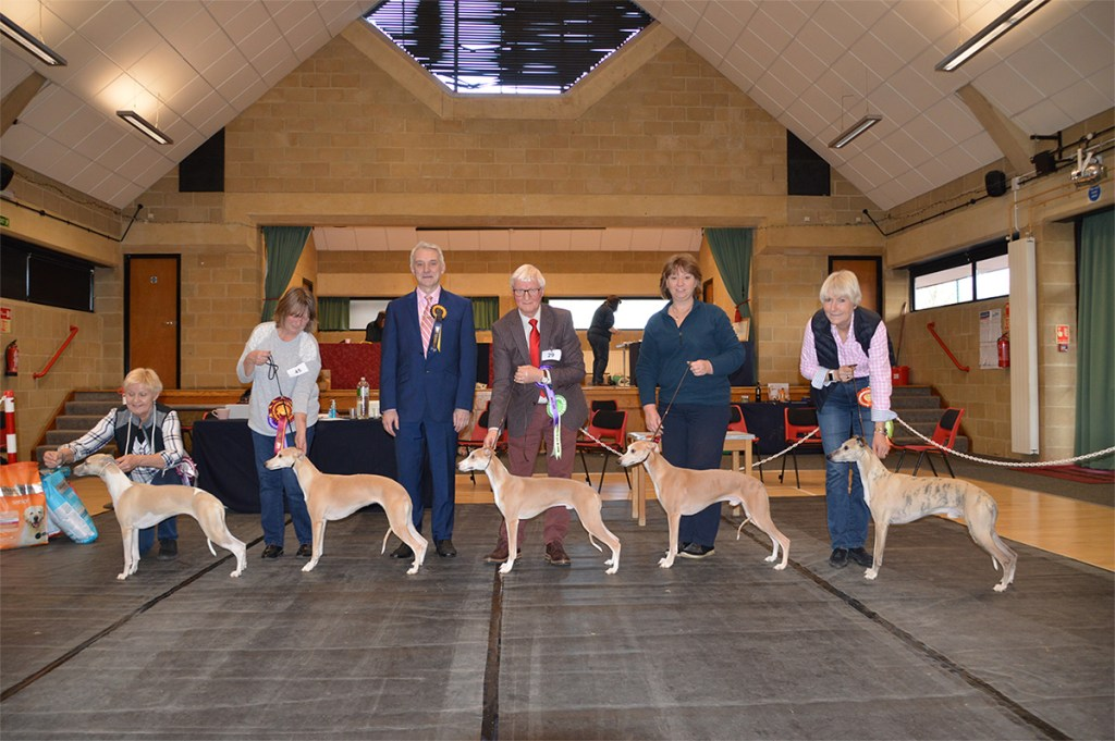 Whippet Club Limited Show Jan 2020 BiS