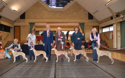 Whippet Club Members Limited Show January 2020 – Results