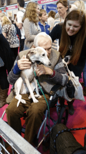 Aldie the whippet at Crufts