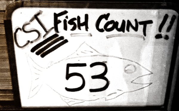 fishcount53-500