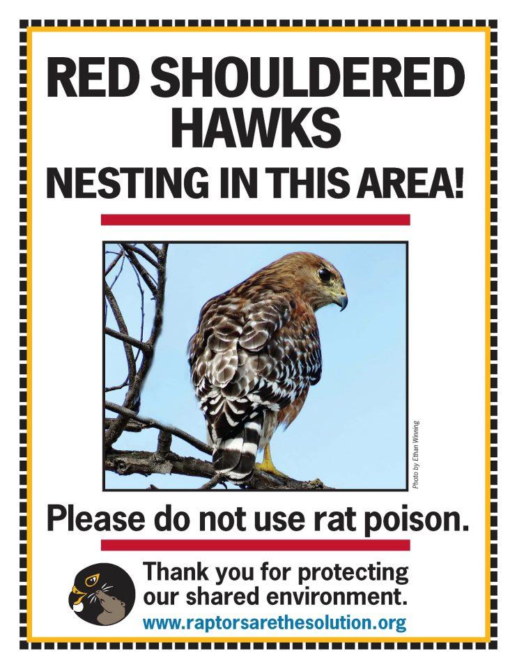 RATS Red-shouldered Hawk