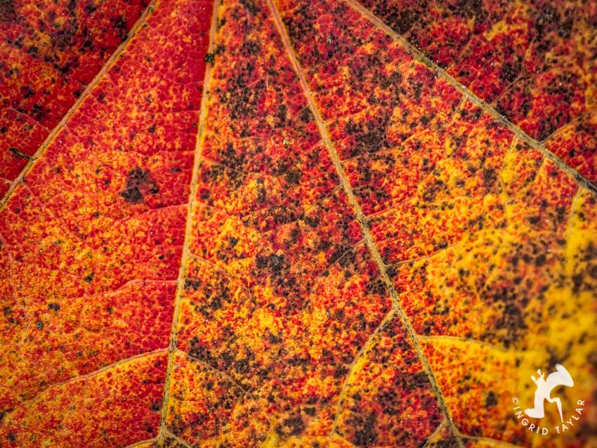 Autumn Leaf Closeup