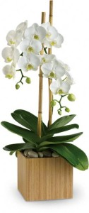The Wild Orchid features 100's of designs in all price ranges. Look over our extensive selection of Flowers, Arrangements,515-276-4600