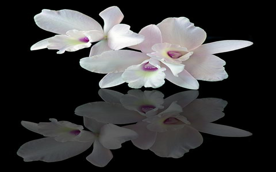 Reflecting_Orchids_Upgradejpeg