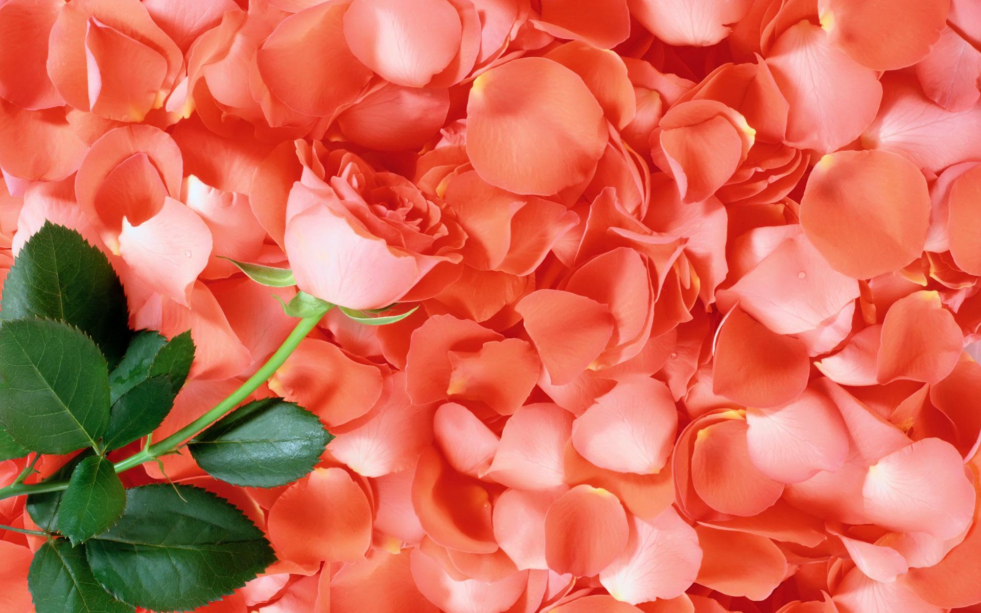 Wild Orchid Des Moines Florist Des Moines Flower Shops Petals