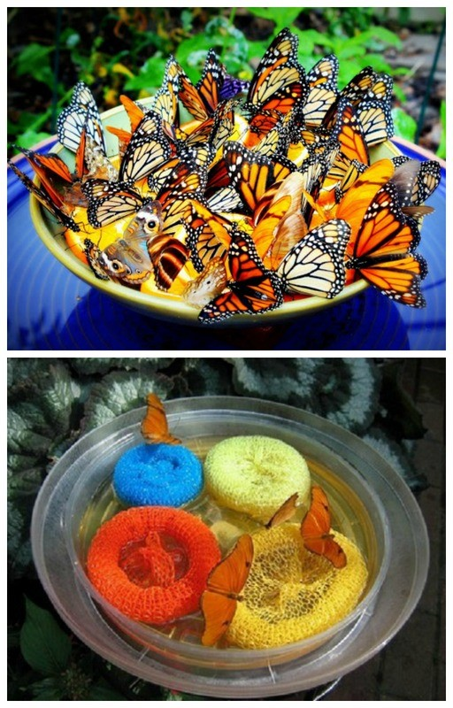 Make Butterfly Nectar: