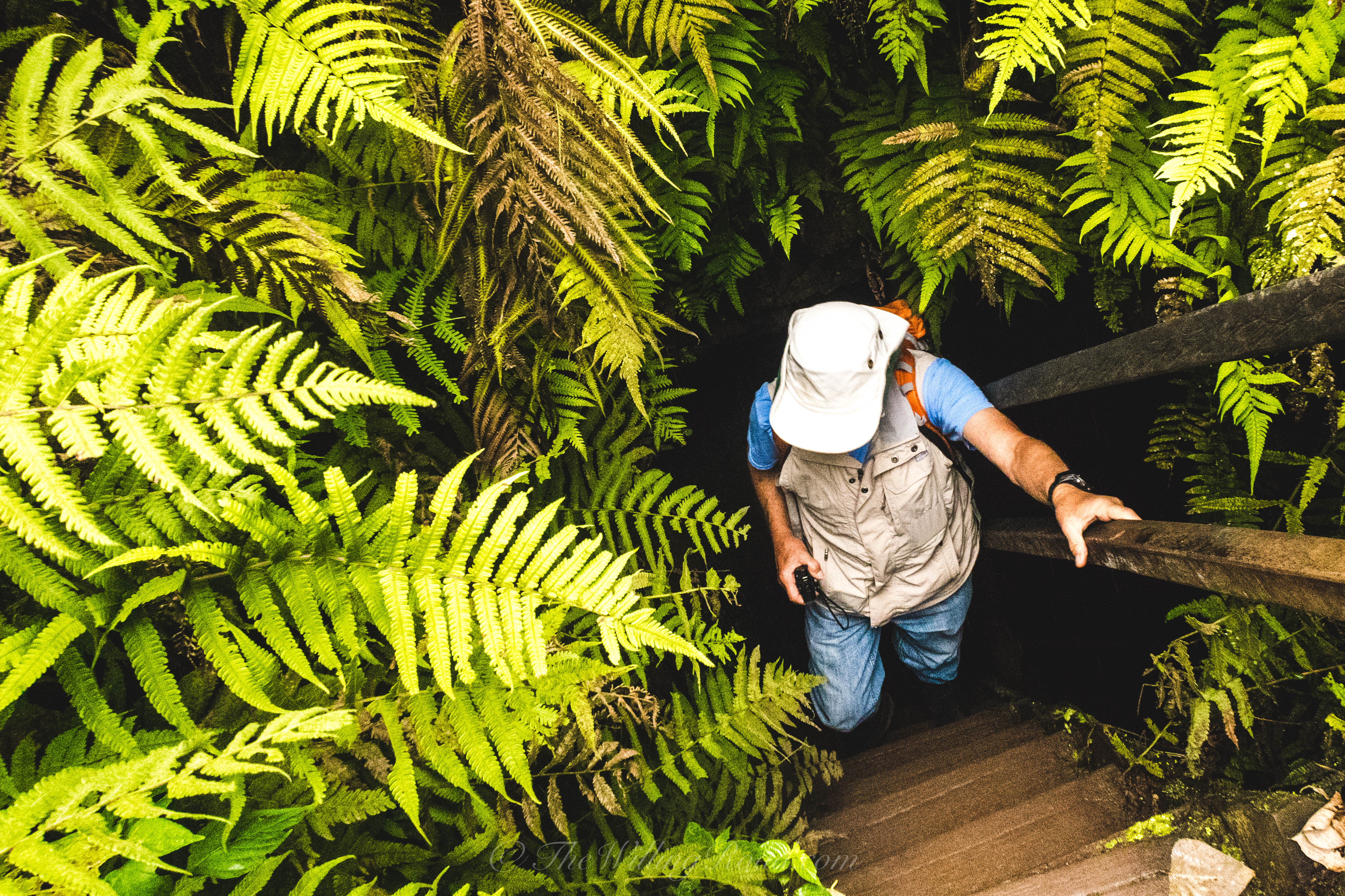 The lava tunnels are on the Island of Santa Cruz beneath the giant tortoise route. The pathway reemerges amongst some beautiful fern plants.