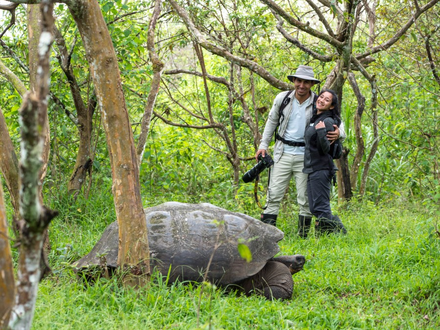 Go see the Giant tortoises in the Galapagos