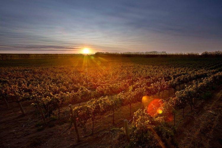 Sunset on Rio Negro's wine country at Bodega Familia Schroeder