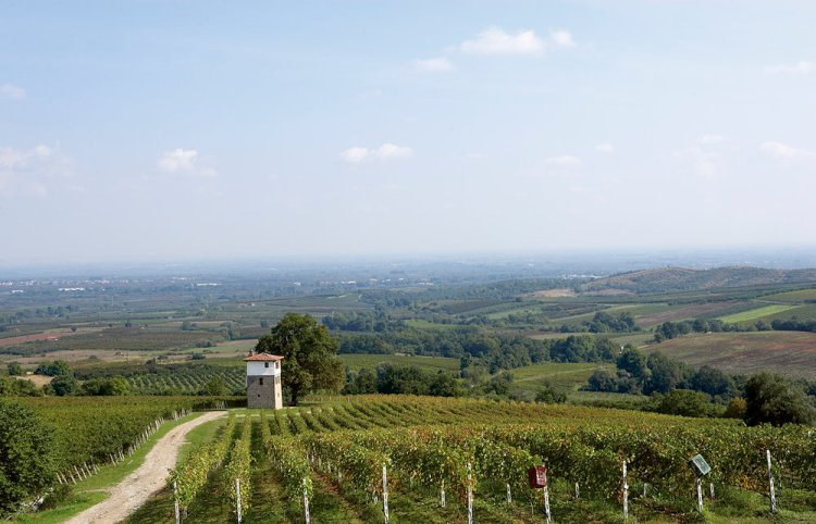 The Kir-Yianni vineyards in Naoussa, another of of Naoussa's most iconic producers