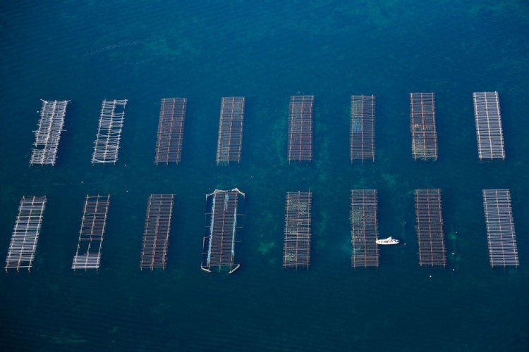 An aerial view of the oyster beds of L'etang de Thau