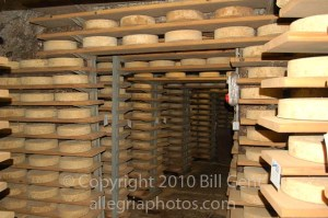 Shelves of Bitto cheese age inside the Cave at the Crotto Ombra Restaurant, Italy