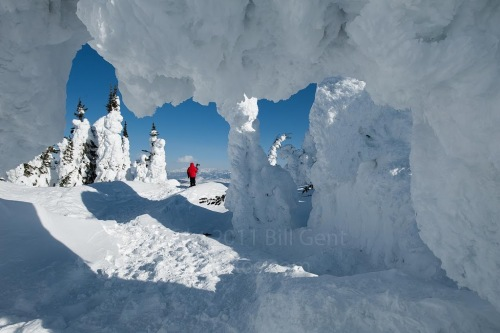 Trees entombed in snow on Two Top Mountain
