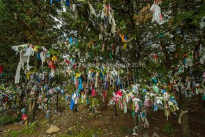 Supplicants tie strips of cloth to a tree and make a wish, Georgia