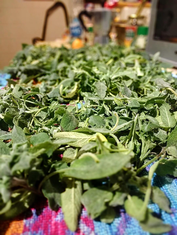 theWise in cucina: Salvia sott'olio con scorze d'arancia amara