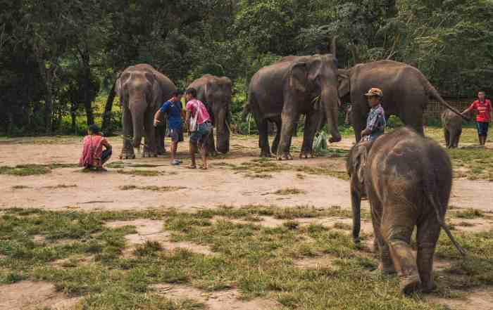 Ethical Elephant Sanctuary in Thailand slide