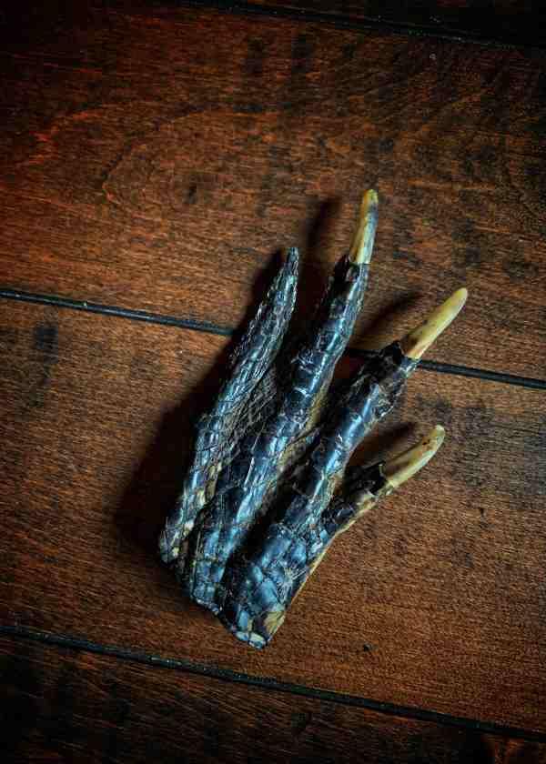 Alligator Foot Amulet